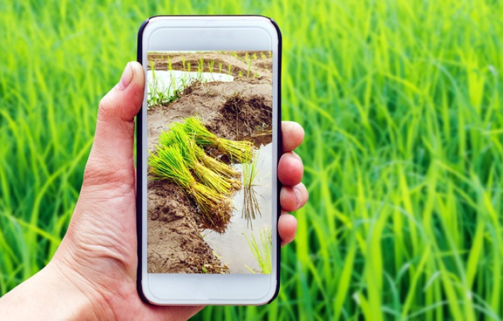 Hire Agritech Software Developers